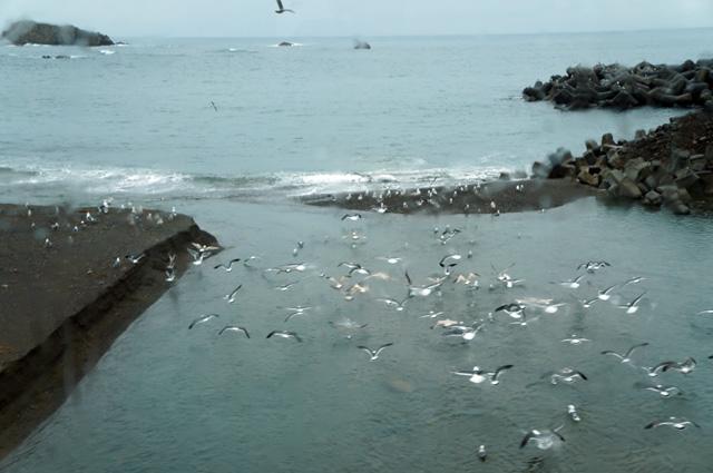 Pemandangan tebaik yang saya dapatkan di sepanjang jalur tepi laut Gono Line :D