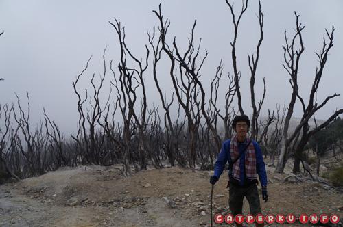 Nah, kalau ini dead forest Gunung Papandayan yang kesannya mistis banget *hiiii*