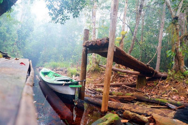 Pemandangan di dekat camp WWF Punggu Alas yang begitu memukau