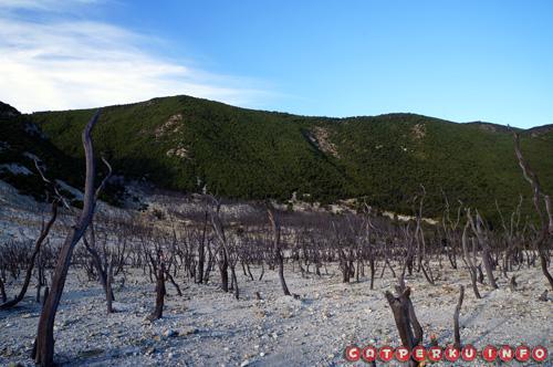 Yang sudah mati dan yang masih hijau. Hutan mati terbentuk akibat sisa letusan Gunung Papandayan yang menghanguskan sebagian vegetasi. Yak, seperti inilah pemandangan yang kontras sisi bukit yang begitu hijau, dan hutan mati yang gersang.