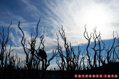 Ketika pagi mulai menghilang, dan hari menjelang siang, tinggallah siluet cantik dari hutan mati Gunung Papandayan