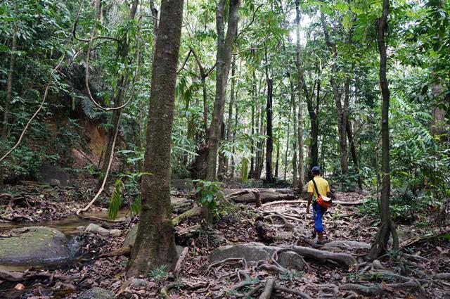 Saya pun enggak menyangka kalau ada hutan yang seru buat trekking di dekat kota besar seperti Kuala Lumpur.