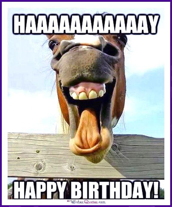 Funny Animal Birthday Images