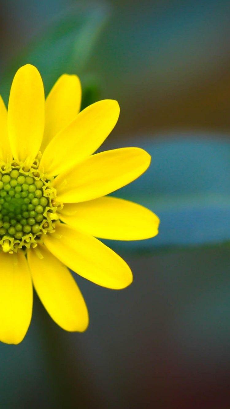 Iphone Wallpaper Hd Nature Flower