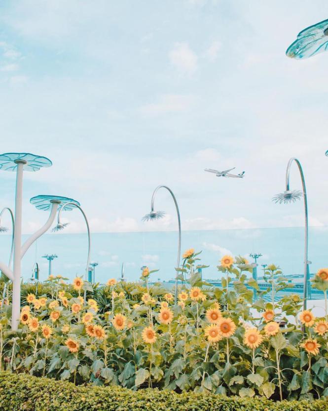 7 Fasilitas Gratis Di Bandara Changi Airport Singapura Untuk Penumpang Yang Mau Terbang!