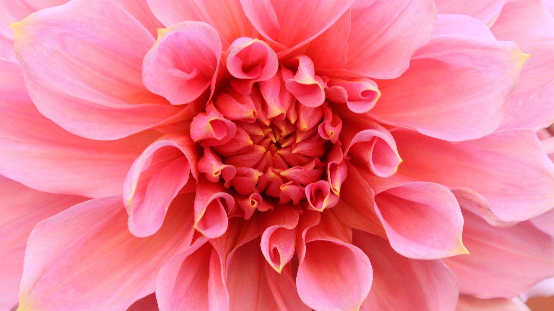 Beautiful Flower Desktop Full Screen Wallpaper Hd