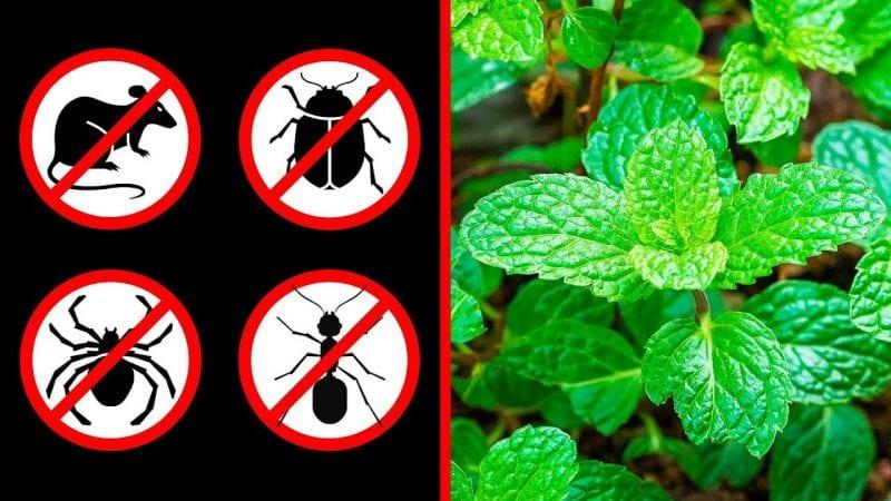 طرق منزلية تساعدك على التخلص من النمل