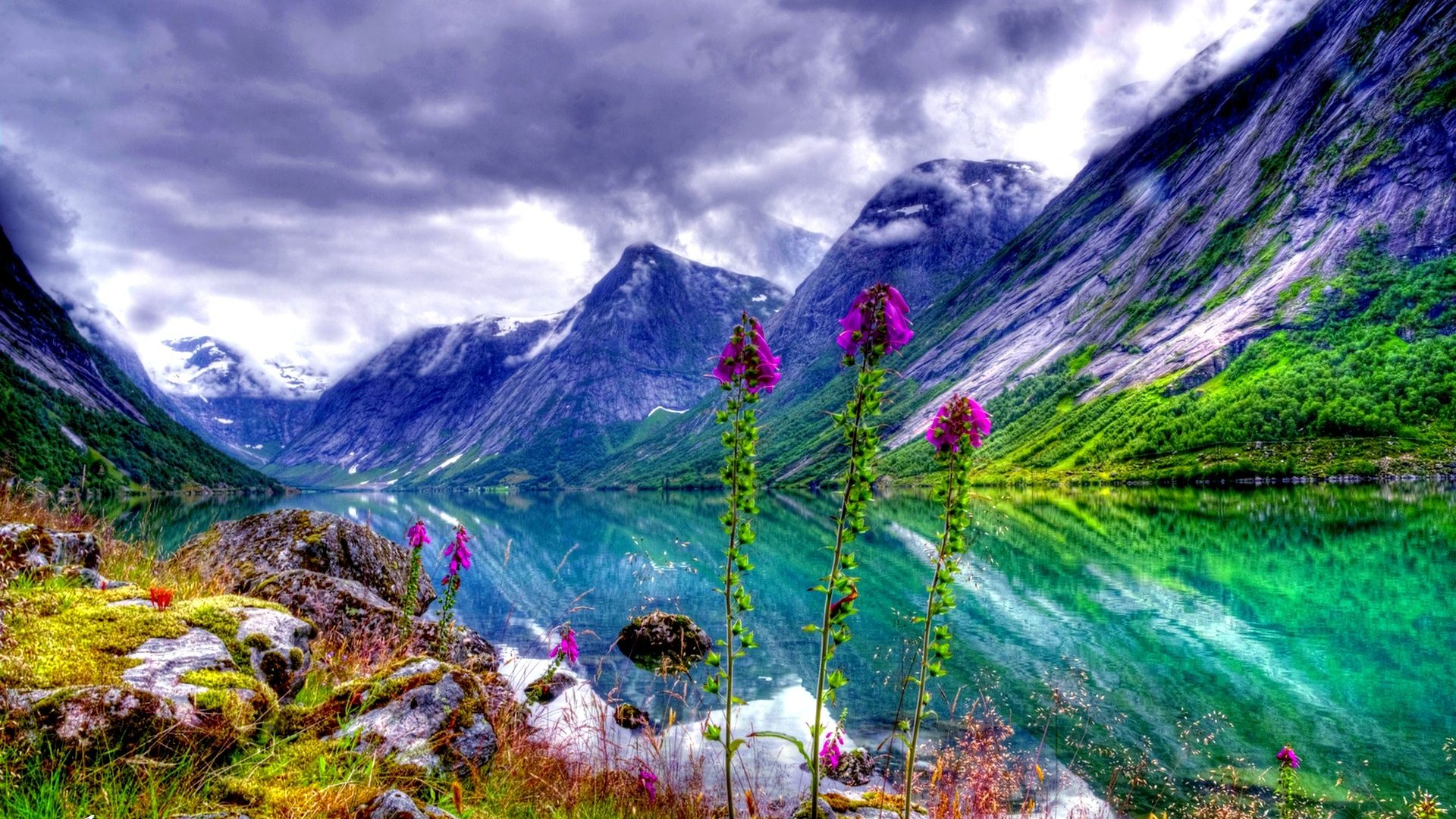 Nature Hd Wallpaper For Mobile 1920x1080