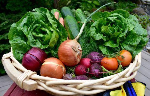 Growing Cool Season Vegetables In Your Fall Garden Myriad Botanical Gardens Oklahoma City 7 August 2021