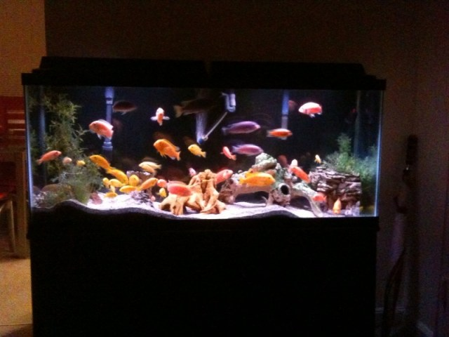 Light Aquarium Gallon Led 55
