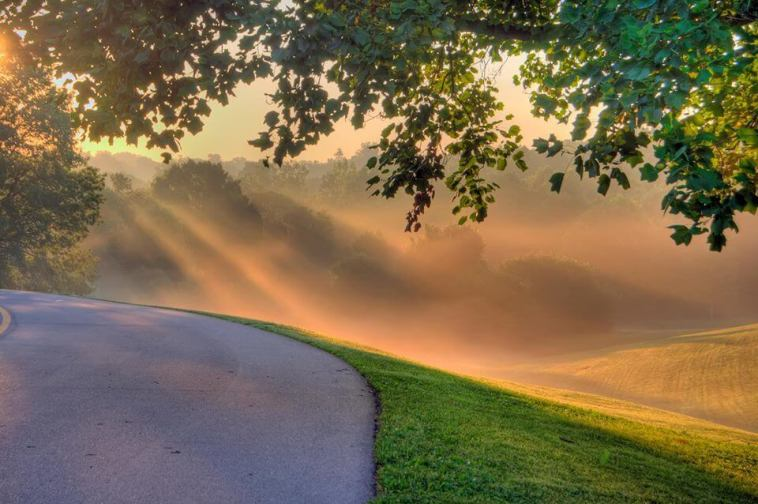 A winding road with a view in Cherokee Park, captured early in the morning. Image: George H. Jones