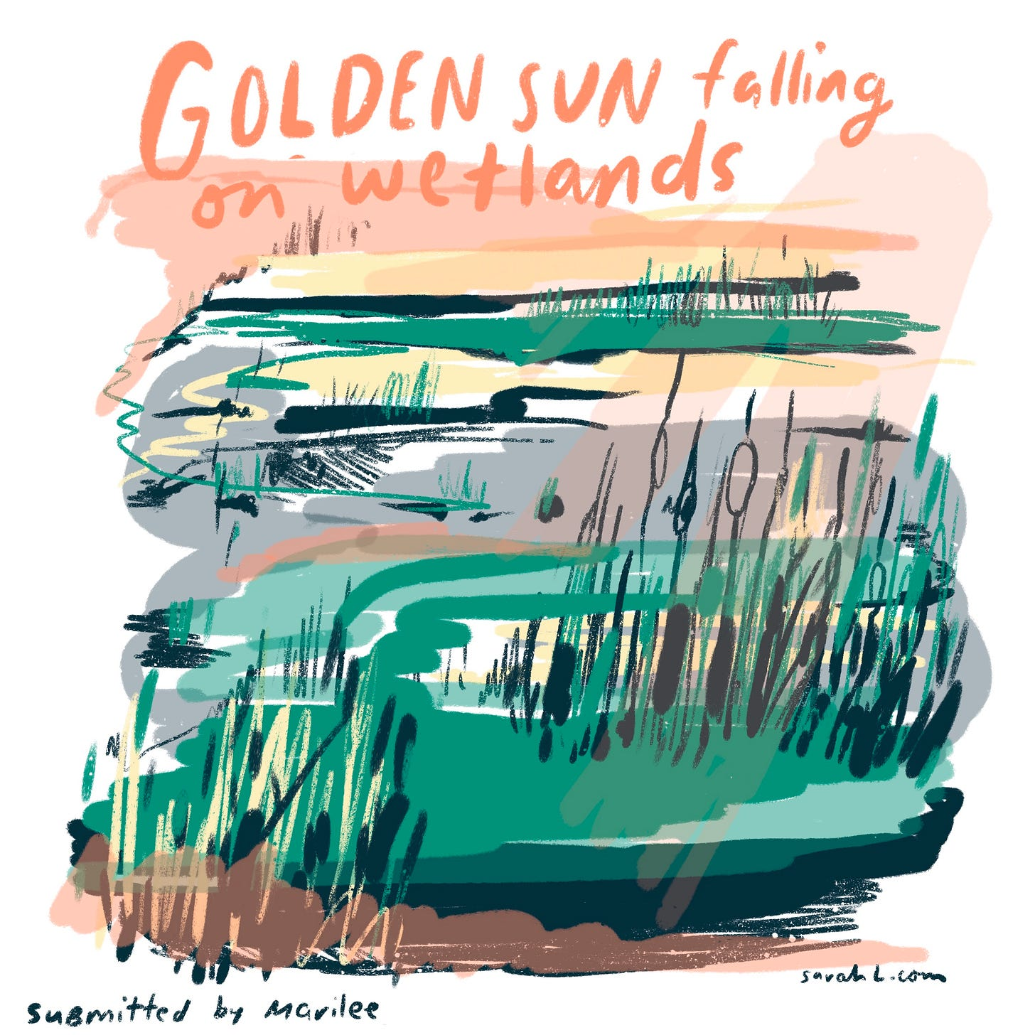 """An illustrated image of wetlands, includes text at the top reading """"Golden sun falling on wetlands."""" The sky is colored orange and yellow, and the wetlands are illustrated with green grasses, grey, white, and yellow water, and grey sketched cattails. The illustration was inspired by a memory submitted by Marilee."""