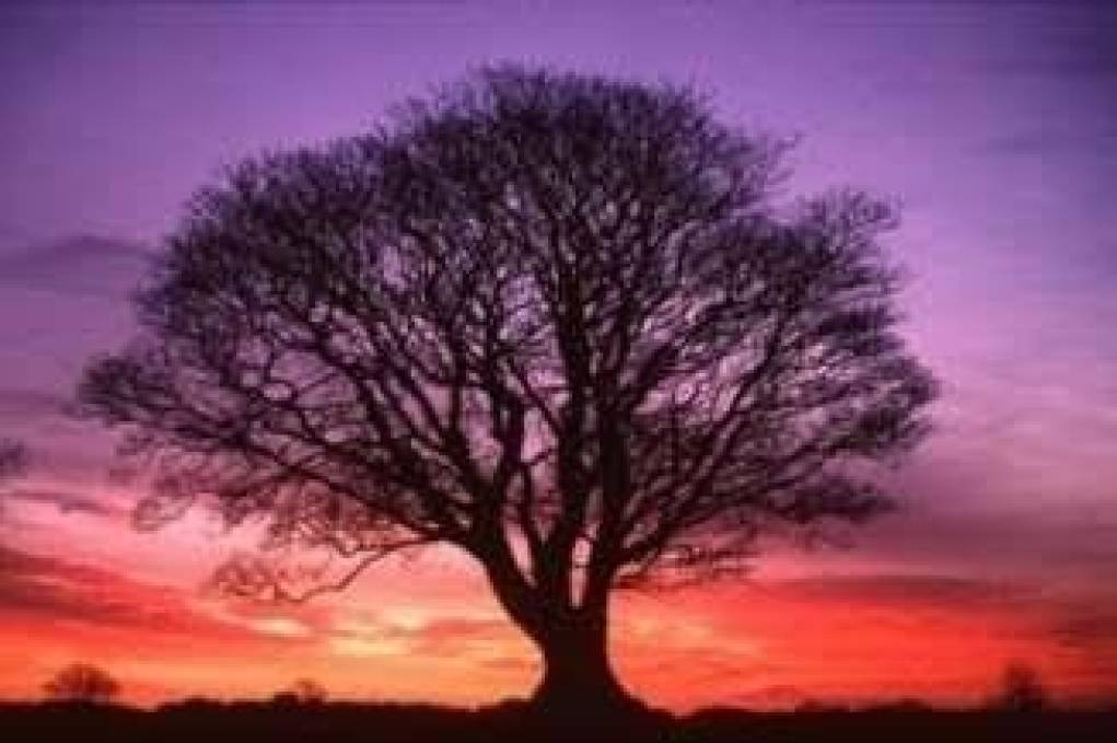 """""""But of the tree of knowledge of good and evil, thou shalt not eat of it:for in the day that ..."""