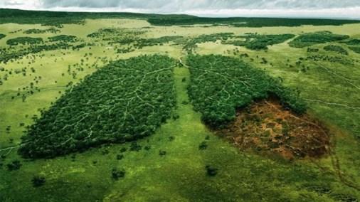 Potret Hutan Sebagai Paru-paru Dunia
