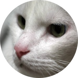 round image of a male cat's face