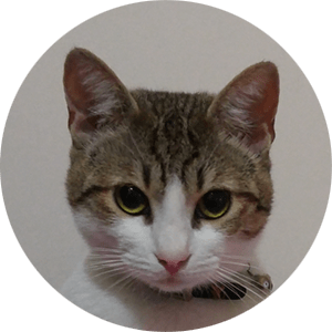 round image of a female cat's face