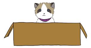 Cat Run Mobile Runner Game Case Study 7