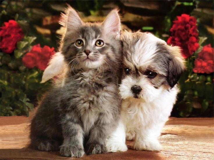 cute cat and puppy
