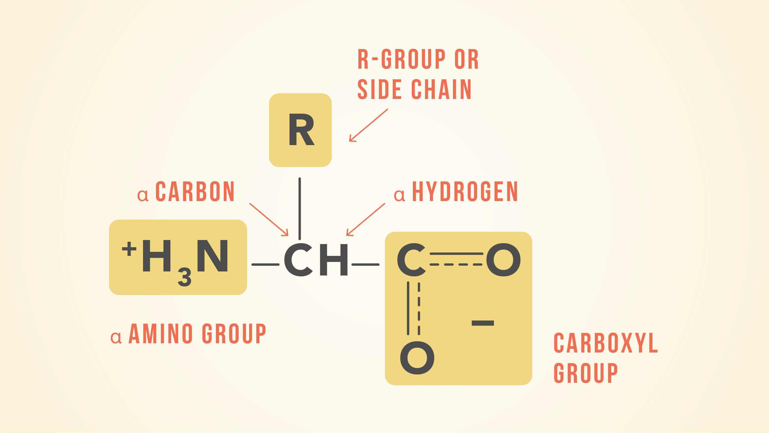 Essential Amino Acids Chart Abbreviations And Structure