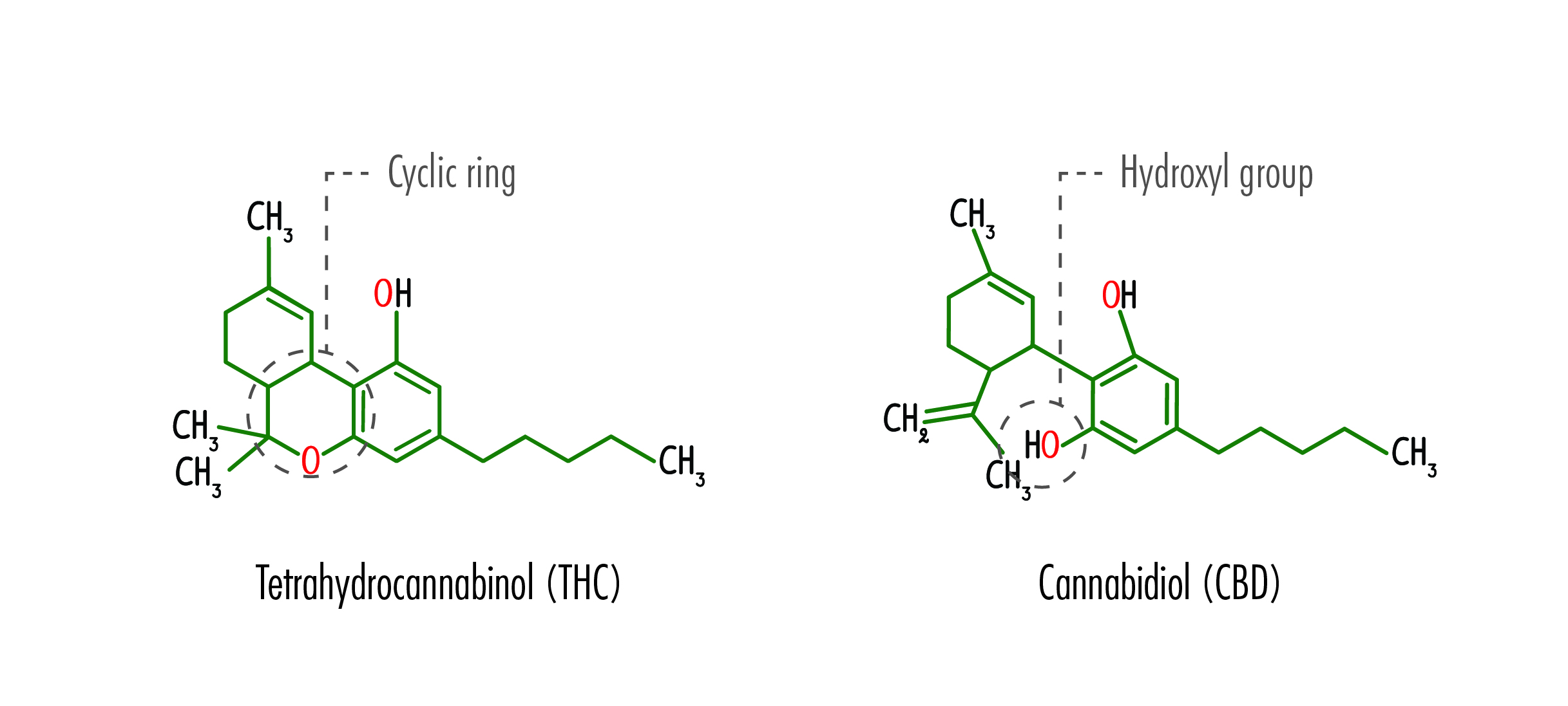 Cbd Vs Thc What Are The Main Differences