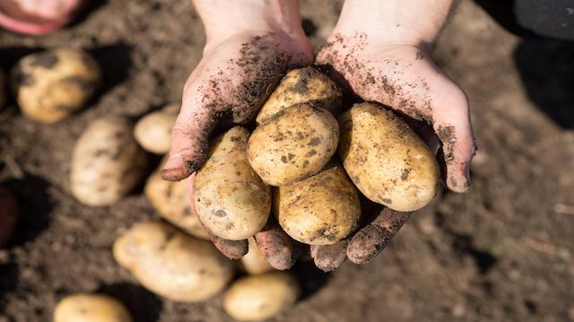 Roasted Potatoes Recipes