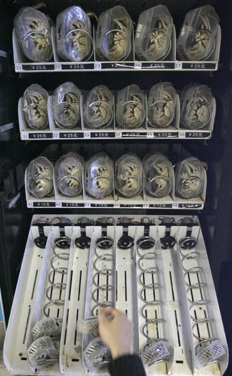 maquina expendedora de cangrejos lugares extraños de China
