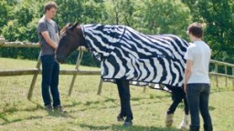 Joren Brugginkof and Jai Lake with a horse that's pretending to be a zebra