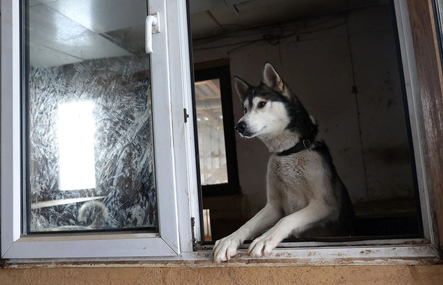 A dog leans out of a building's open window.