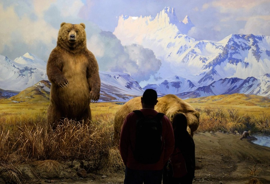 Visitors look at an exhibit with a pair of stuffed bears.