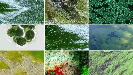 A collage of photographs of algae