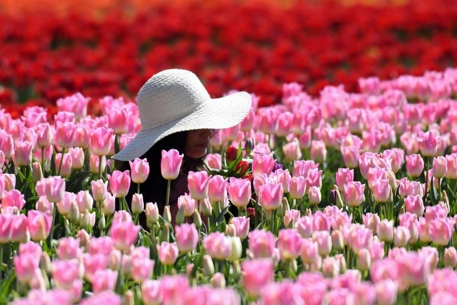 A woman poses among tulips.
