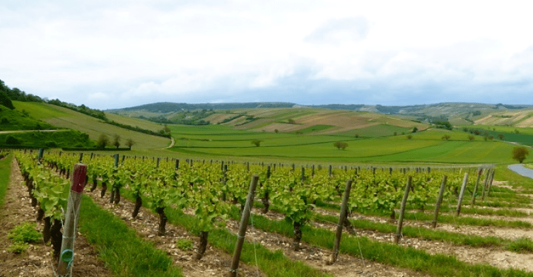 Vineyards in the Sancerre wine-growing region of France. Credit: Peter/Flickr, CC BY-SA