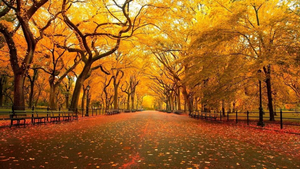 Image result for beautiful trees