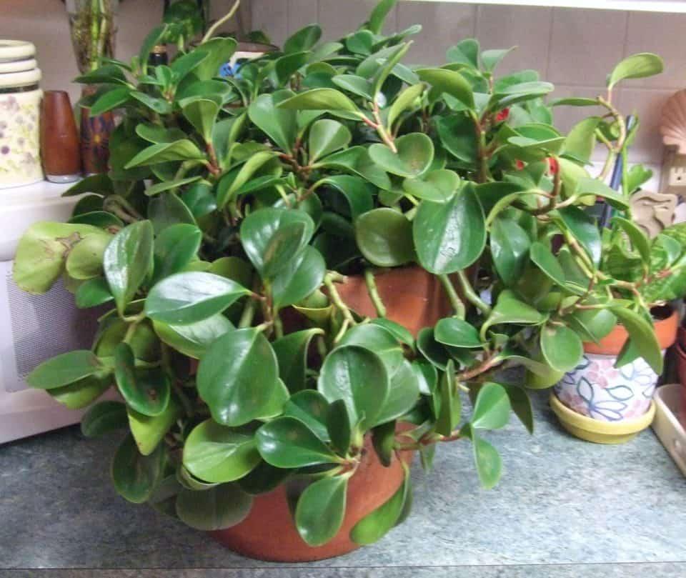 Indoor Plants Can Grow Water
