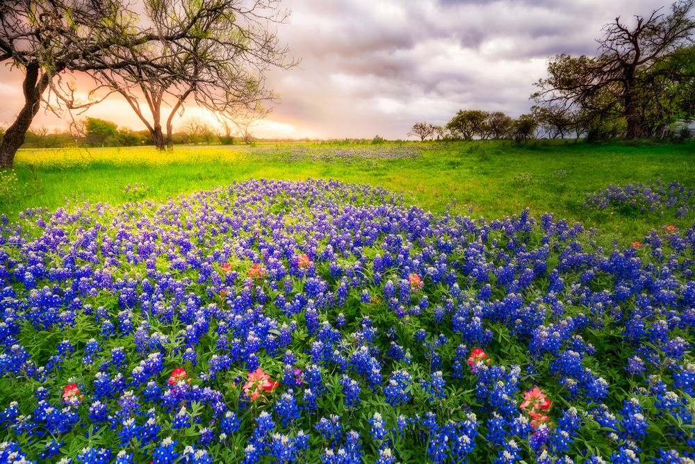 23 Most Beautiful Places to Visit in Texas   Page 4 of 22   The     Bluebonnets  Texas