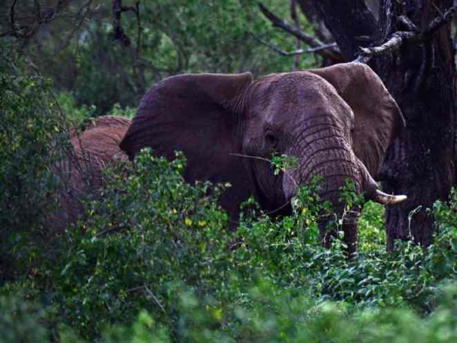Babile Elephant Sanctuary