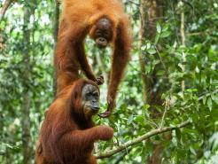 Tourist Attractions in Aceh - Mount Leuser National Park