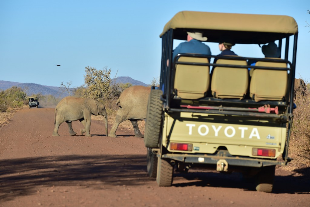 Game drive at Madikwe Game Reserve, North West, South Africa © South African Tourism/Flickr