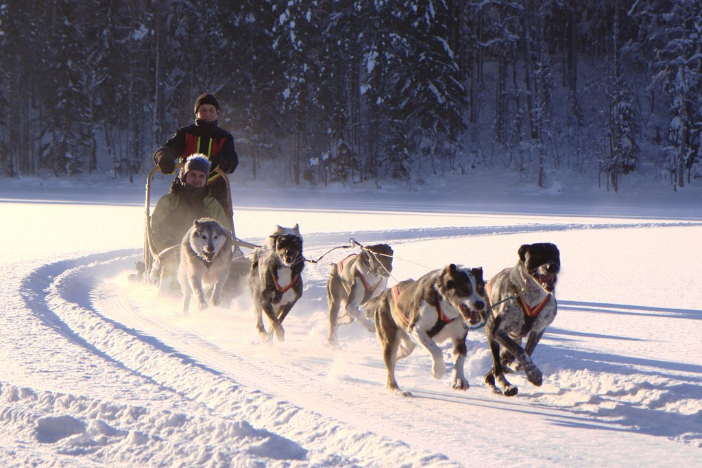 Where To Go Dog Sledding In The USA