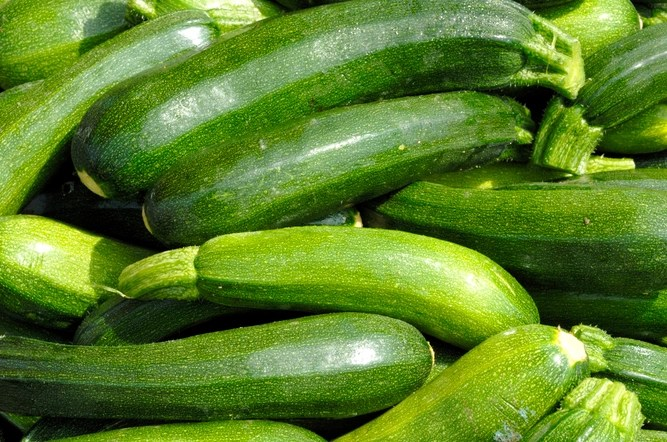Please, for the love of god, take these courgettes, plead vegetable gardeners
