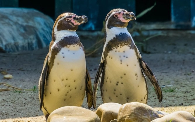Is your partner better than a gay penguin? Take the quiz…