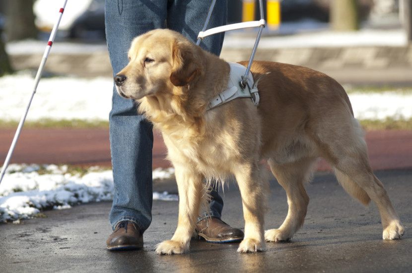 You can support the training of service dogs by donating points and miles.