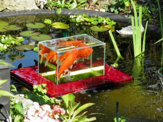 Backyard Pond Fish Sale