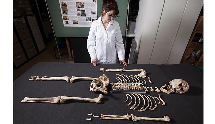 A conservator examines the complete skeleton of Cheddar Man before it went on display at the Natural History Museum, UK. Credit: NHM UK