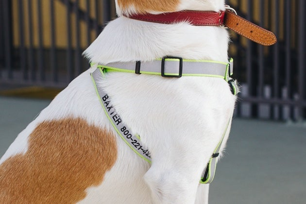 The Best Dog Harness  Reviews by Wirecutter   A New York Times Company A side view of a dog wearing the personalized back only harness