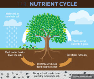 Roots form at the bottom of the tree and gather food from