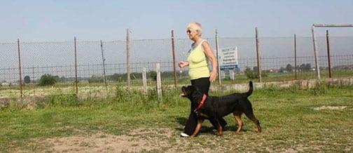 Eh Ma Il Suo Cane è Allegro E Scodinzola Ti Presento Il Cane