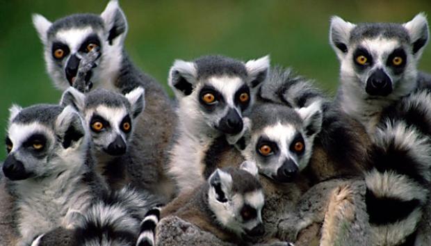 Bumi Memasuki Fase Punah, Ini Hewan-hewan yang Terancam