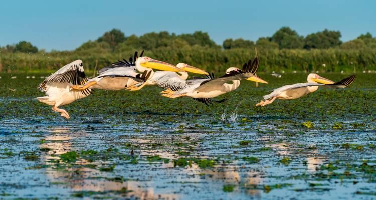 Wisata Ramah Lingkungan 2020 - Sungai Danube, Romania