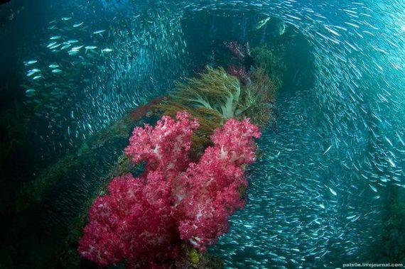 Imagini pentru imagini subacvatice